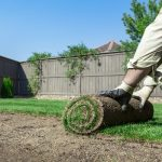 Sod vs. Seed: Which is Better for Your Real Grass Lawn?