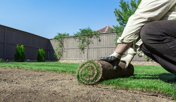 man rolling sod grass roll into dirt