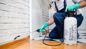 pest control expert at work in a home