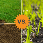 sod vs seed comparison