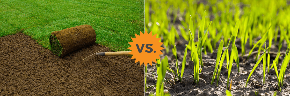 2020 Gr Seed Vs Sod Rolls Costs