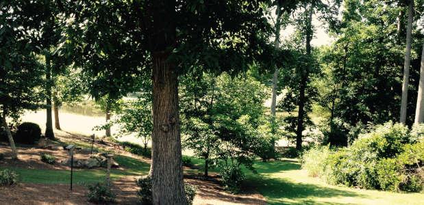 Trees In Landscape