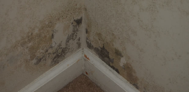 Mold And Basement Odors Black Mold Removal