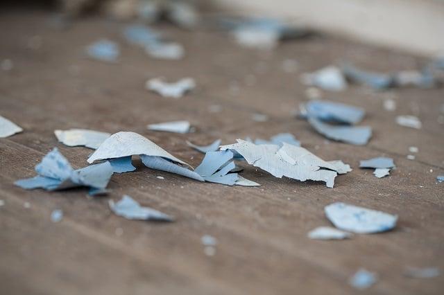 Lead paint chips on old hardwood floor