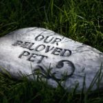 Pet Memorials at Home: A Guide to Logistics and Legalities for Memorializing Your Pets