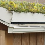 """A rooftop garden or """"green roof"""". The container garden is on top of a shed at an elementary school that is teaching the children how a """"living roof"""" absorbs rainwater, provides insulation, and helps to lower urban air temperature within the shed."""