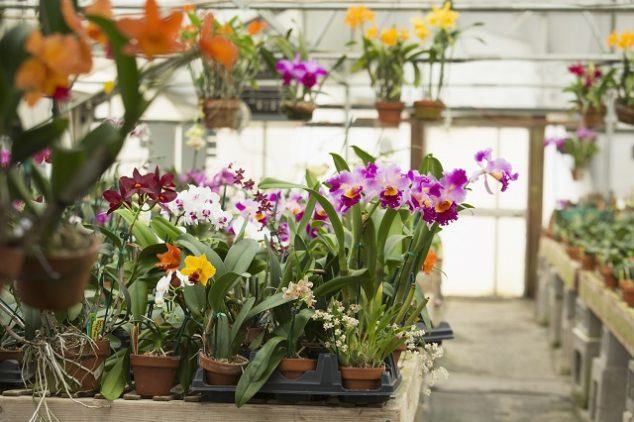 Orchid plants growing in greenhouse at nursery