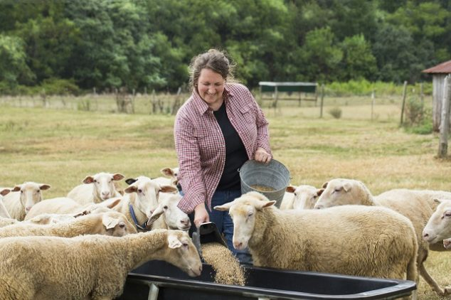 Female farmer feeding sheep in a field