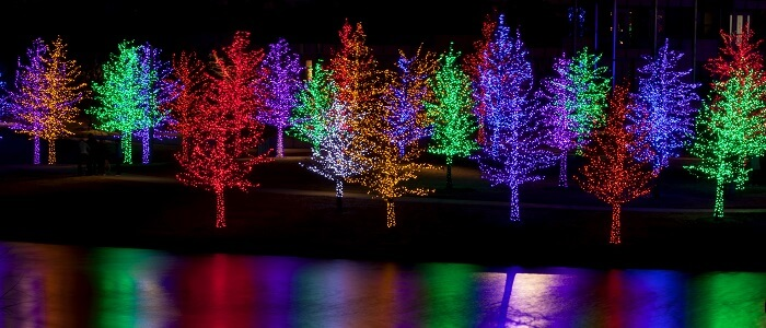 led lights on Christmas trees by a lake