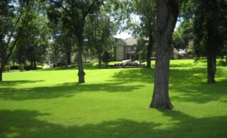 Lush green grass on a shaded lawn