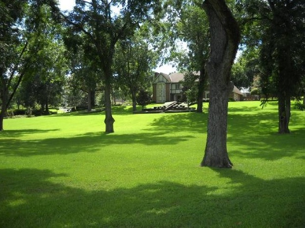 Lush green grass shaded by trees