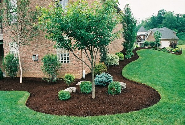 Mulched trees and bushes around a house