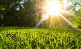 lawn grass in the sun