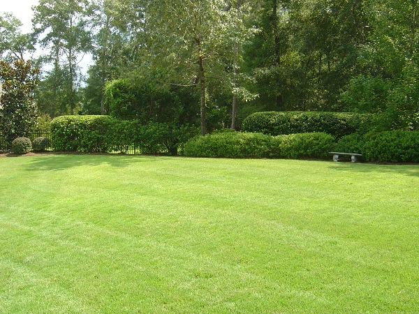 Lush green lawn and hedges