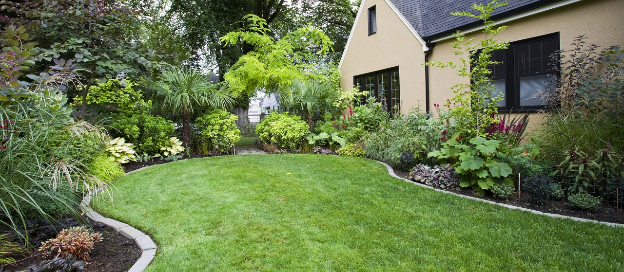 close-up of backyard landscaping