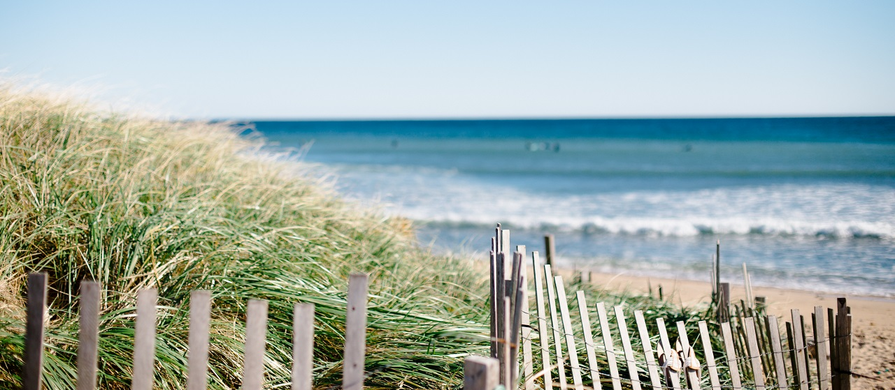 close up of a reed fence at the beach