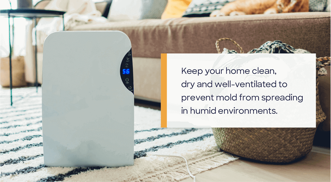 keep your home clean, dry and well-ventilated to prevent mold from spreading in humid environments.