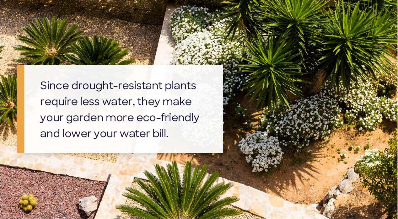 drought tolerant plants in front yard