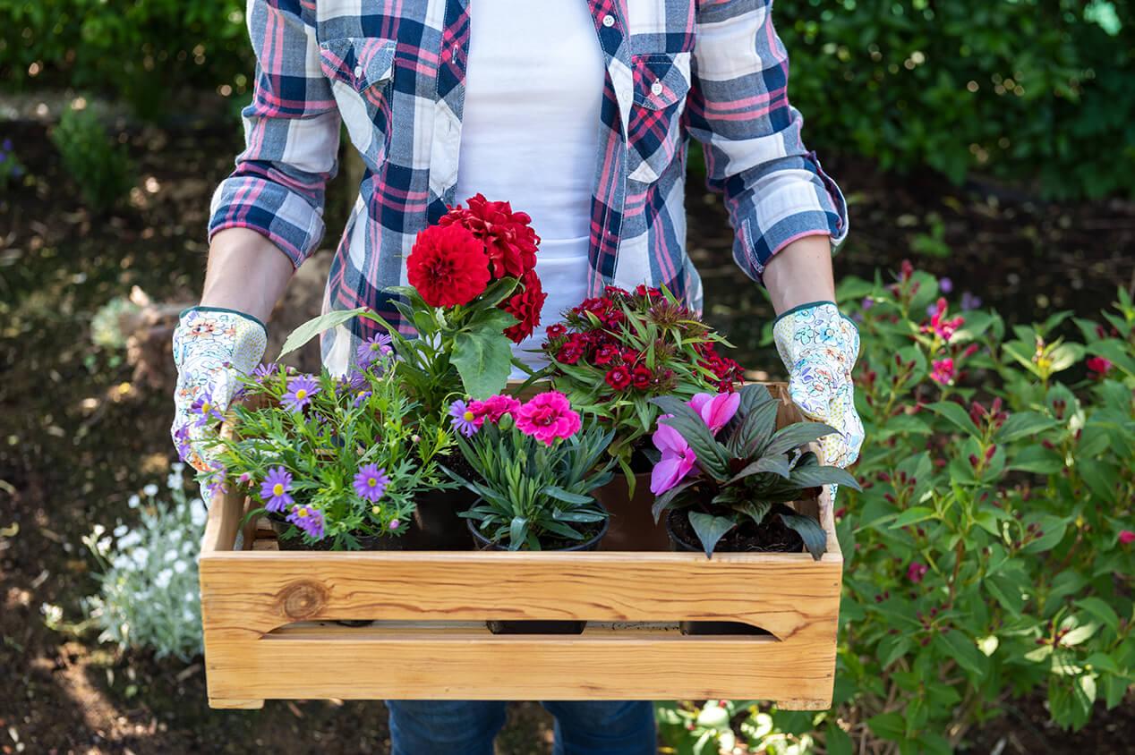 gardener holding box planter with flowers