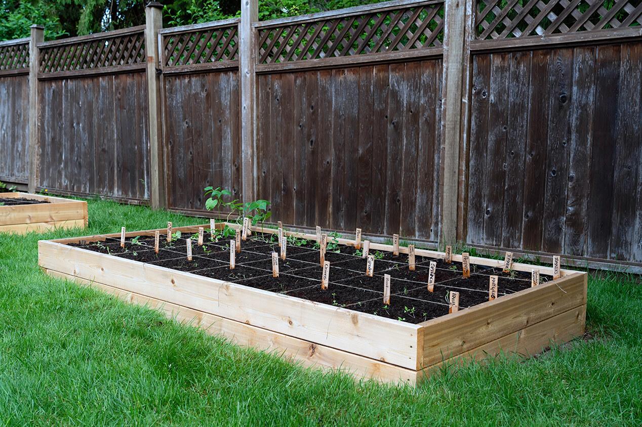 rasied garden bed outside