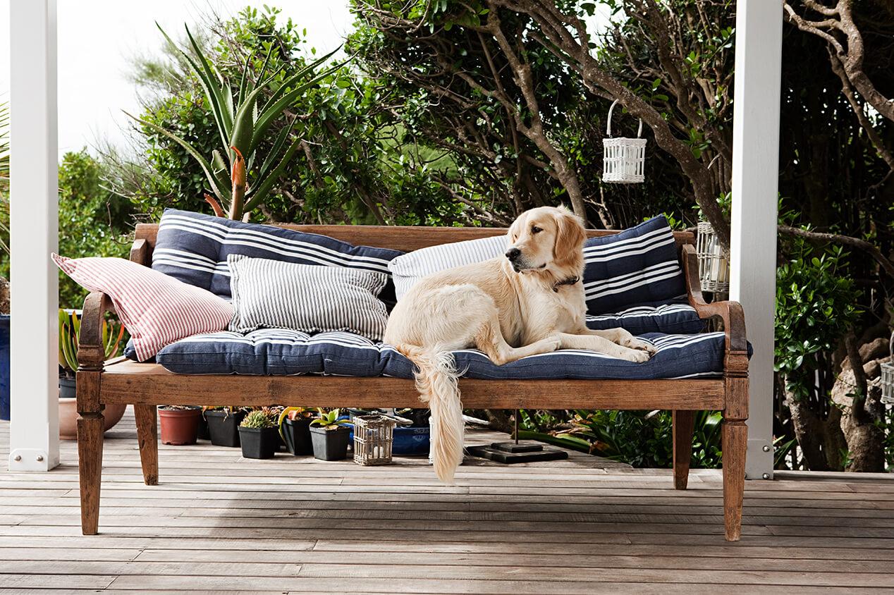 dog sitting on outdoor sofa