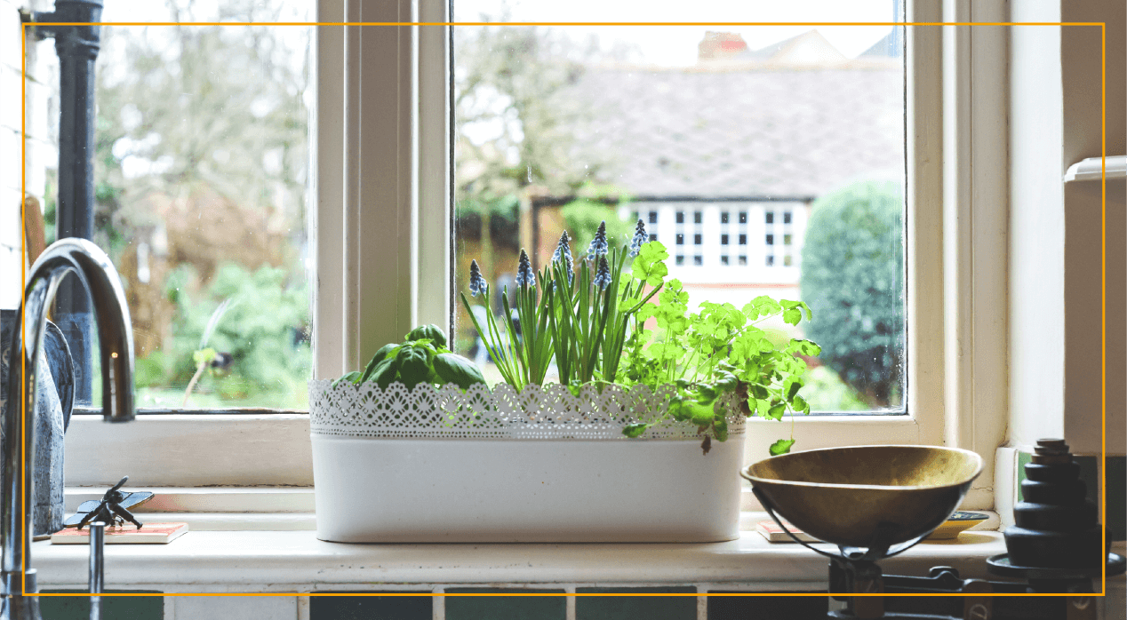 Window garden box with growing herbs