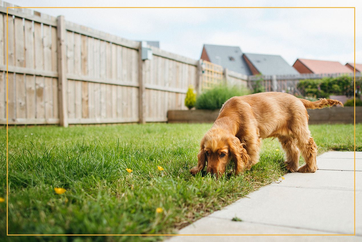 dog in backyard surrounded by wooden fence