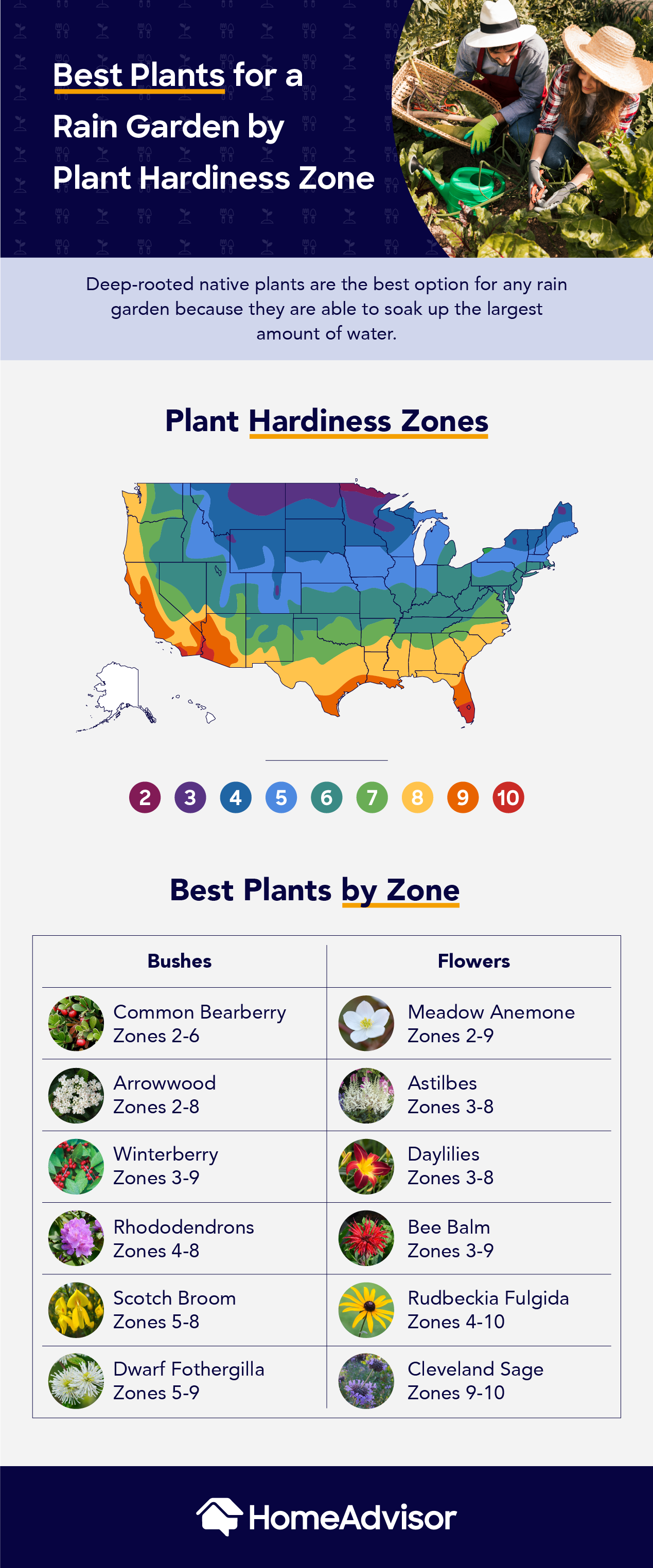 best plants for a rain garden by plant hardiness zone