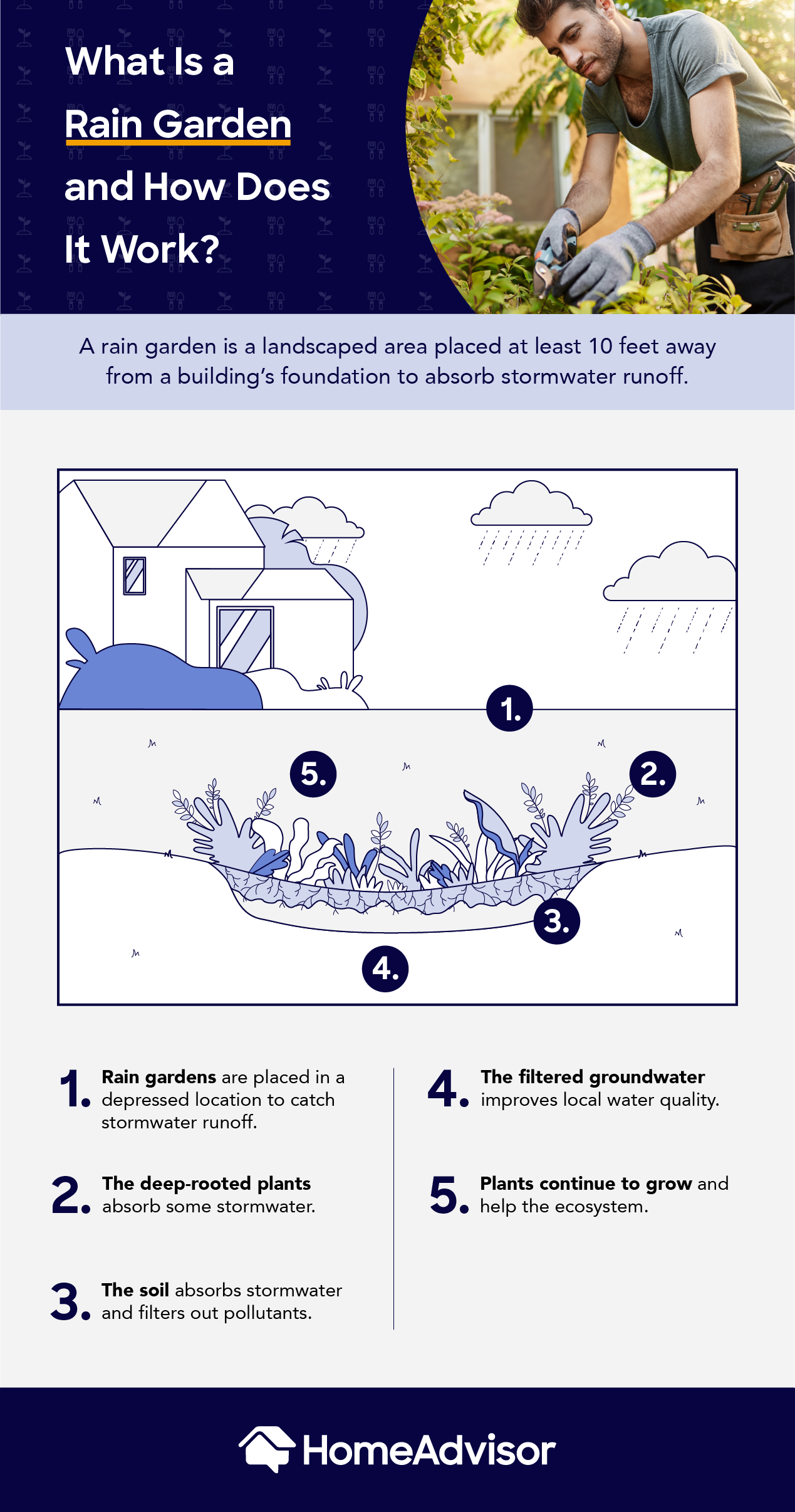 what is a rain garden and how does it work?